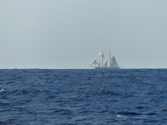 Wylde Swan - a tall ship on the high seas.